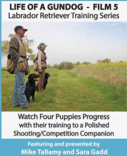 Mike Tallamy & Sarah Gadd's 'Life of a Gundog - Film 5: Labrador Retriever Training Series' DVD